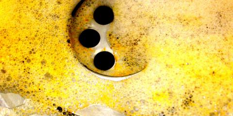 Yellowed soap bubbles at the bottom of a sink