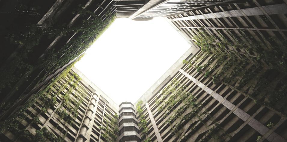 concrete jungle image