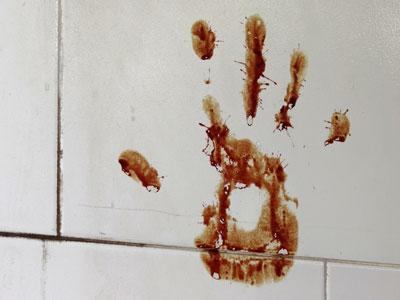 Lucy Grace: These Terrors are of Older Standing