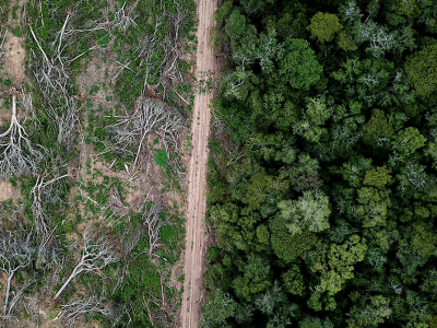 a burnt forest and a lush forest side by side