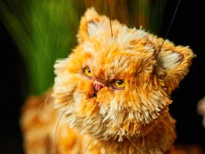 Ginger cat Sourpuss puppet looking at a bee