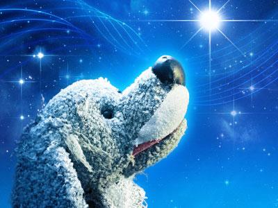 Dog looking at a twinkling star