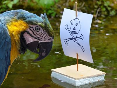 a blue and yellow parrot next to a crudely drawn pirate flag